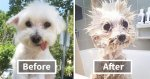 wet-dogs-before-after-bath-fb6__700-png.jpg