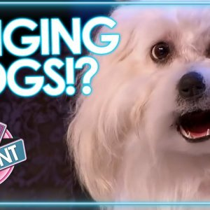 SINGING DOGS!!Crazy Dog Auditions On Got Talent & X Factor